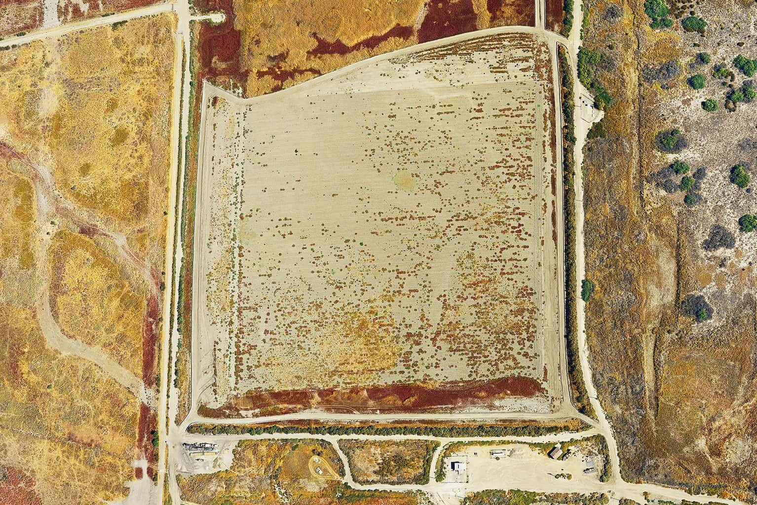 Agriculture #003, Mulholland's Gold, 2011-2014