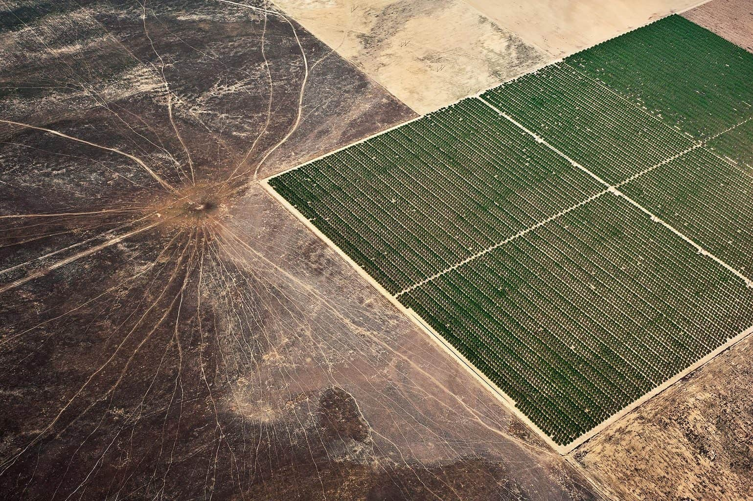 Agriculture #012, Mulholland's Gold, 2011-2014